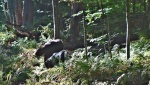 the dogs on the ferny path 9-17-14