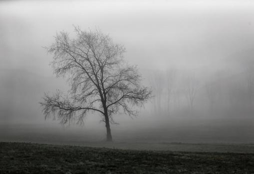 tree in the pasture, Jon Katz 2014