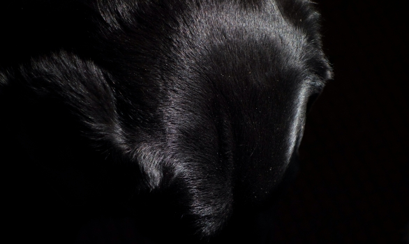 Horace, black on black